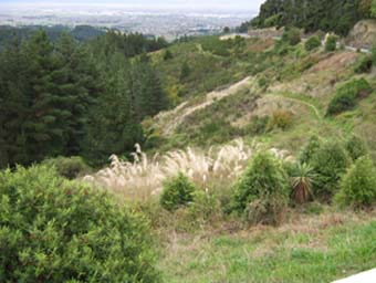 Christchurch from Sign of the Kiwi